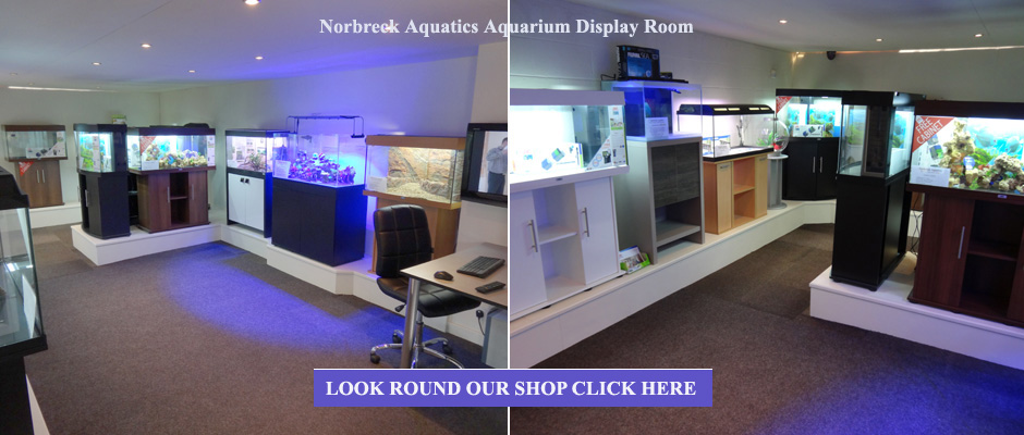 Aquarium supplies pond supplies marine aquarium supplies for Koi pool blackpool