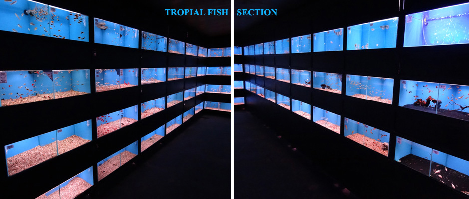 Tropical Fish Section